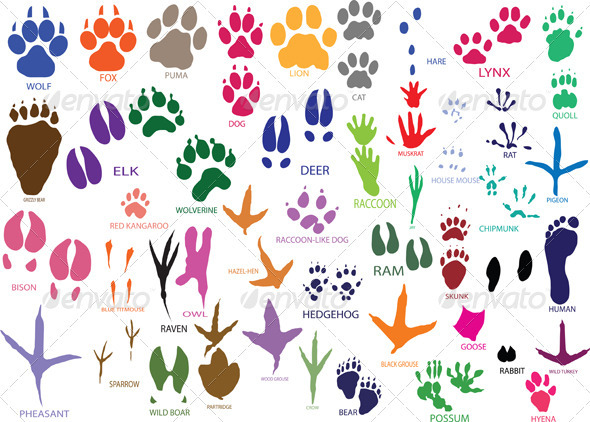 Paw Prints - Animals Characters