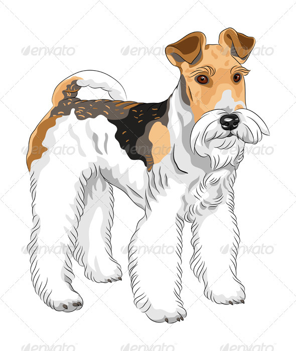Vector Sketch Dog Wire Fox Terrier Breed Standing by Kavalenkava ...