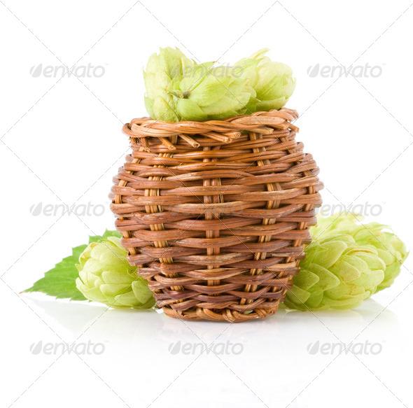 hop isolated on white - Stock Photo - Images