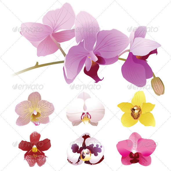 Orchids Flowers - Flowers & Plants Nature
