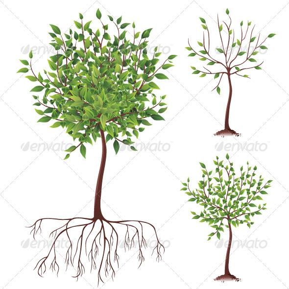 Tree Icons - Nature Conceptual