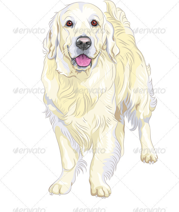 Vector dog breed Labrador Retriever - Animals Characters