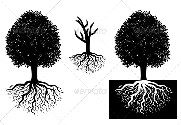 Isolated tree with roots - Miscellaneous Conceptual