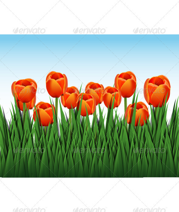 orange tulips - Valentines Seasons/Holidays