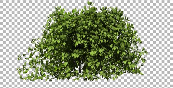 Bush - 3DOcean Item for Sale