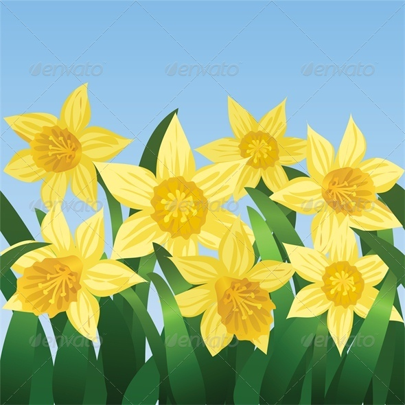 Blue Sky and Blooming Daffodils - Flowers & Plants Nature