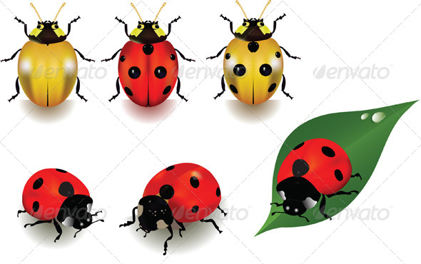 Ladybugs - Animals Characters
