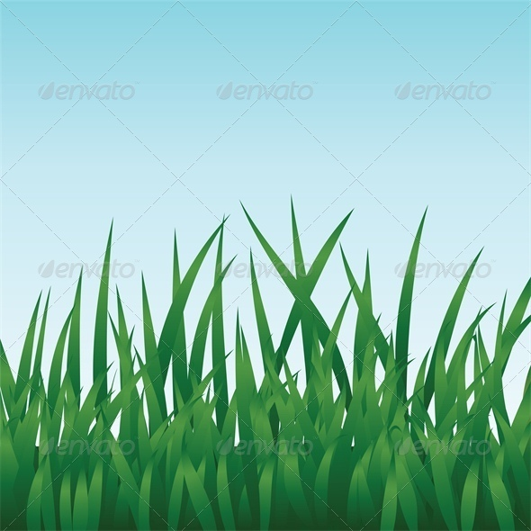 Green Grass and Blue Sky - Flowers & Plants Nature