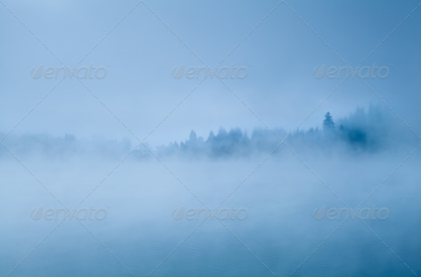 forest in morning fog - Stock Photo - Images