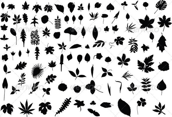 100 Leaves - Flowers & Plants Nature