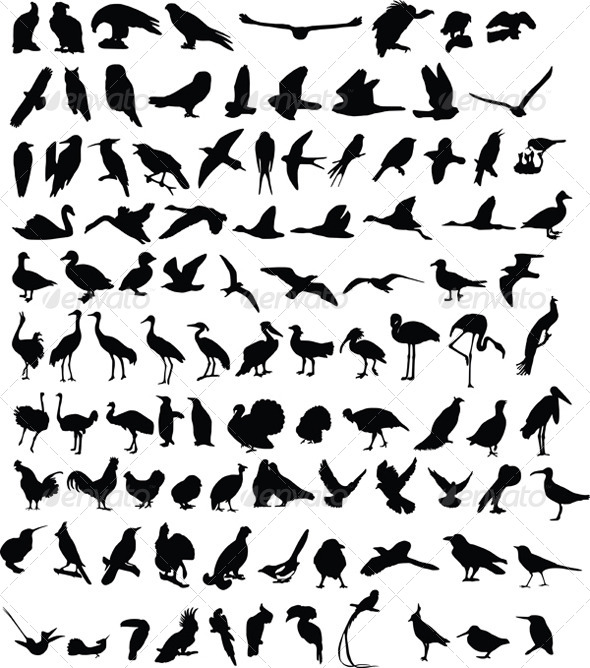 100 Birds - Animals Characters