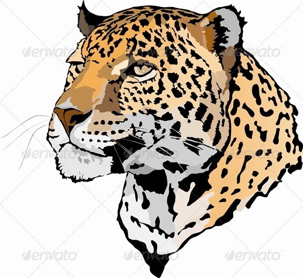 Head of Leopard - Animals Characters