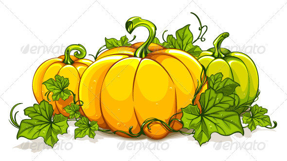 Pumpkins Isolated on White - Vectors
