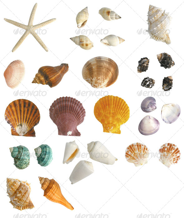 Sea Shells Collection - Nature & Animals Isolated Objects