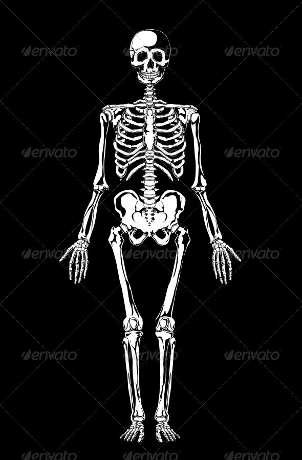Skeleton - Health/Medicine Conceptual