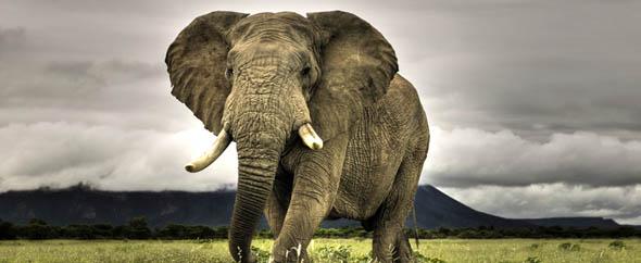 Elephas themeforest