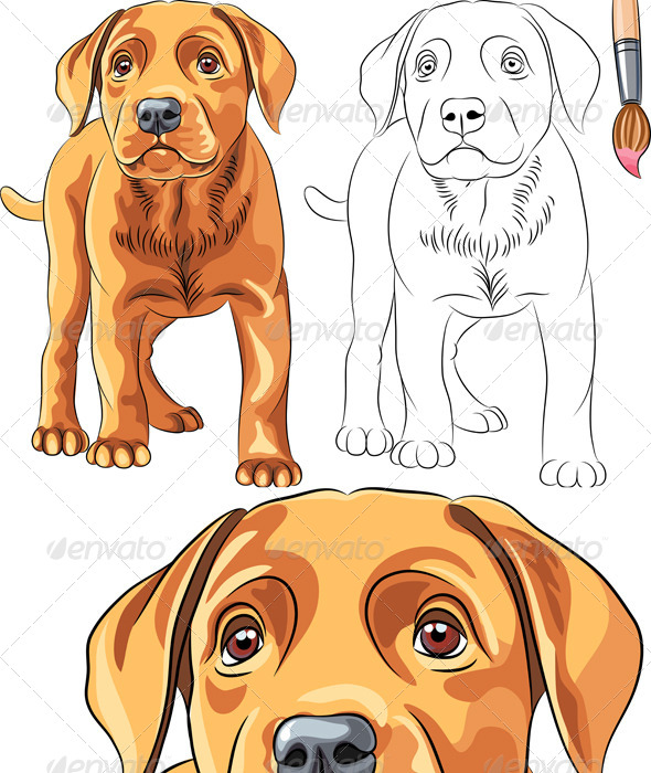 vector coloring book of labrador puppy animals characters