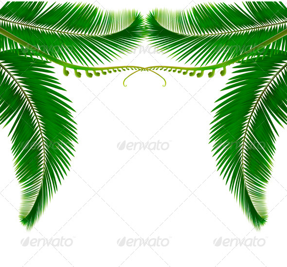 Palm leaves on white background - Flowers & Plants Nature