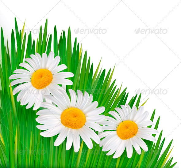 Nature Background with Flowers - Flowers & Plants Nature