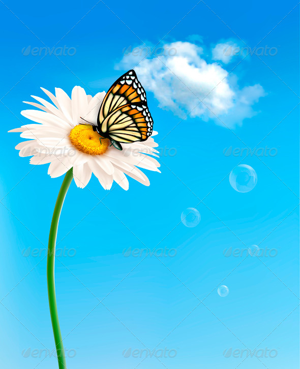 Nature spring daisy flower with butterfly - Flowers & Plants Nature