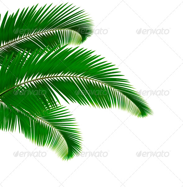 Palm Leaves - Flowers & Plants Nature