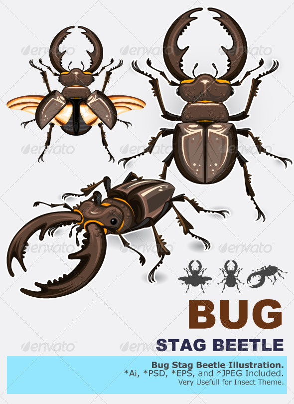 Stag Beetle Insect - Animals Characters