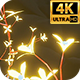 Glowing Flowers 4k - VideoHive Item for Sale