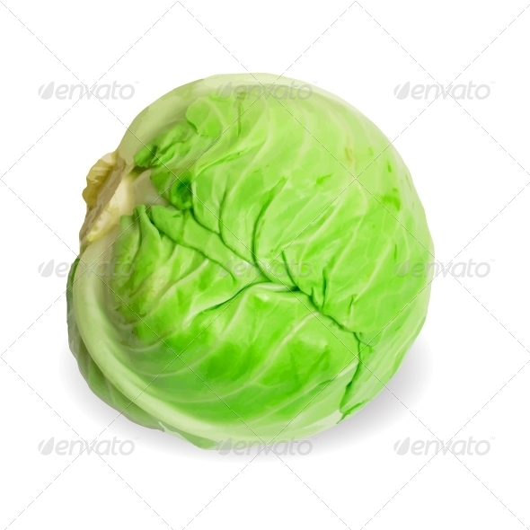 Fresh Cabbage - Food Objects