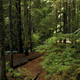 Dense Forest With Tall Trees In Daylight Sunbeams - VideoHive Item for Sale