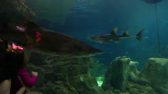 VideoHive Kids Aquarium 20402320