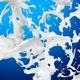 Splash Of Creamy Milk V6 - VideoHive Item for Sale