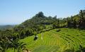Classic asian rice field