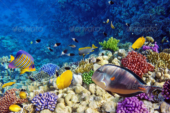 Red Sea, Corals, underwater