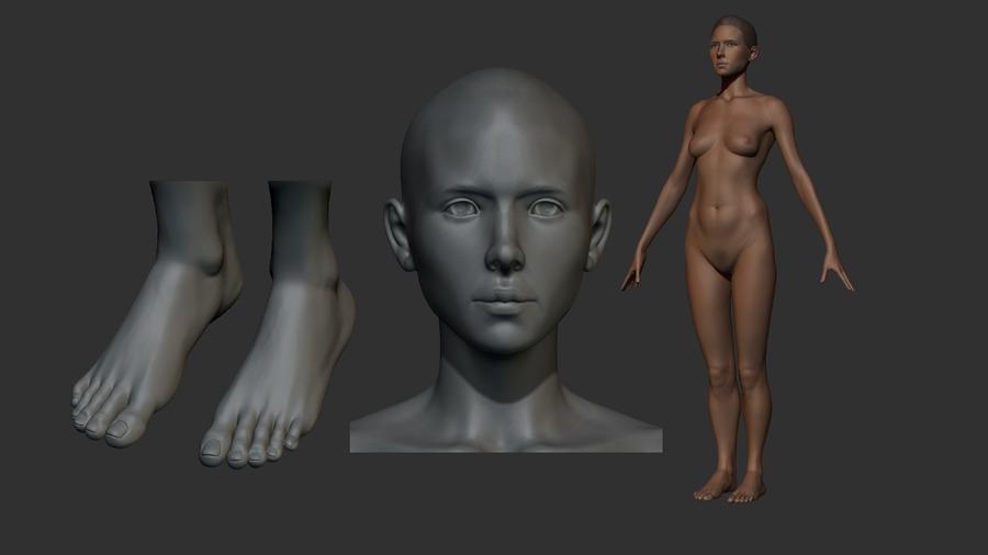 Female Anatomy Model Angela By Stevejjd 3docean