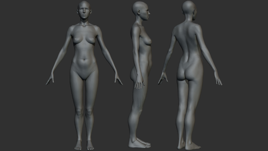 Female Anatomy Model Angela by stevejjd | 3DOcean