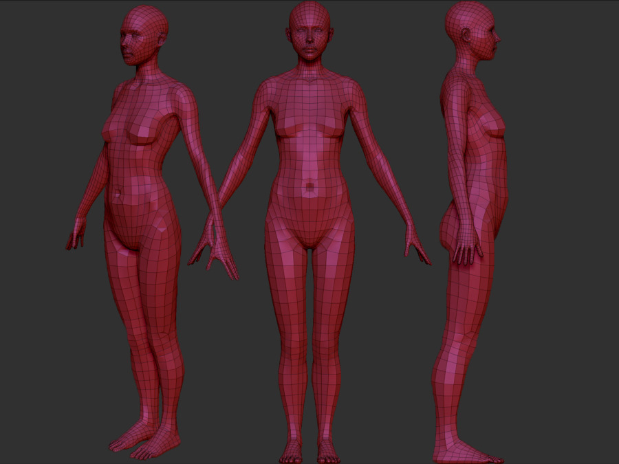 Female Anatomy Model Angela by stevejjd | 3DOcean