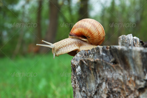 Big snail - Stock Photo - Images
