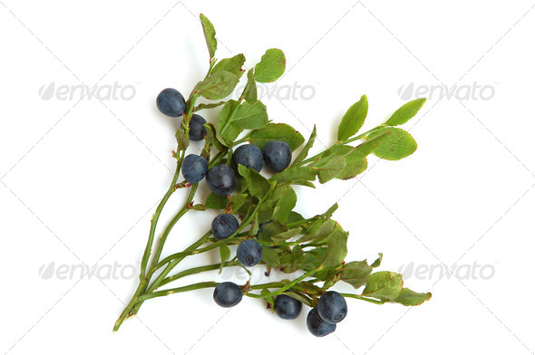 Bilberries - Stock Photo - Images