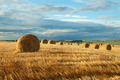 Hay bales - PhotoDune Item for Sale