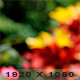 Garden Background - VideoHive Item for Sale