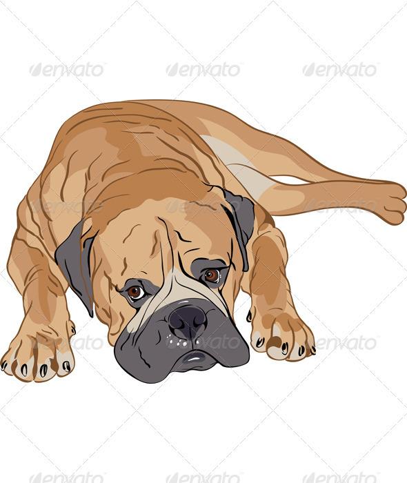 Purebred Bullmastiff - Animals Characters