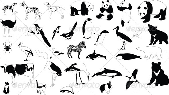 Black and White Animals - Animals Characters