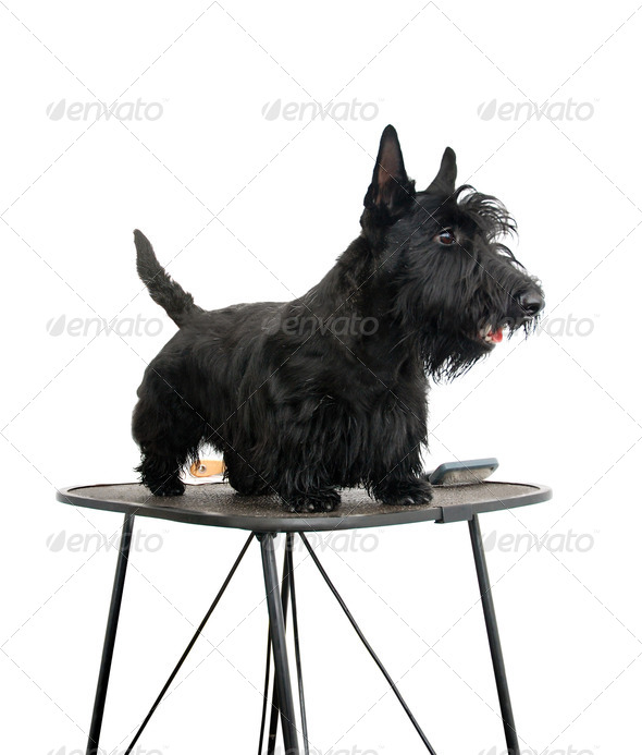 Grooming - Stock Photo - Images