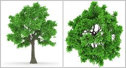 trees (100 megapixels)
