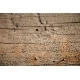 Bark of old tree - GraphicRiver Item for Sale