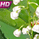 Spring Lily of the Valley - VideoHive Item for Sale