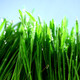 Grass Under Rain 1 - VideoHive Item for Sale