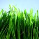 Grass Under Rain 1 - VideoHive Item for Sale