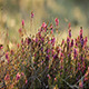 Flowers in the Morning - VideoHive Item for Sale