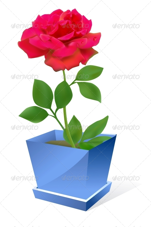 Red Rose Flower in Pot - Flowers & Plants Nature